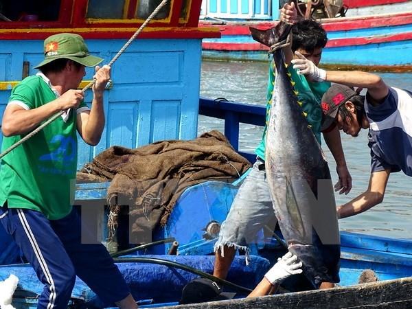 Vietnam's tuna exports witness impressive growth
