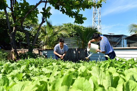 Island soldiers increase vegetable production