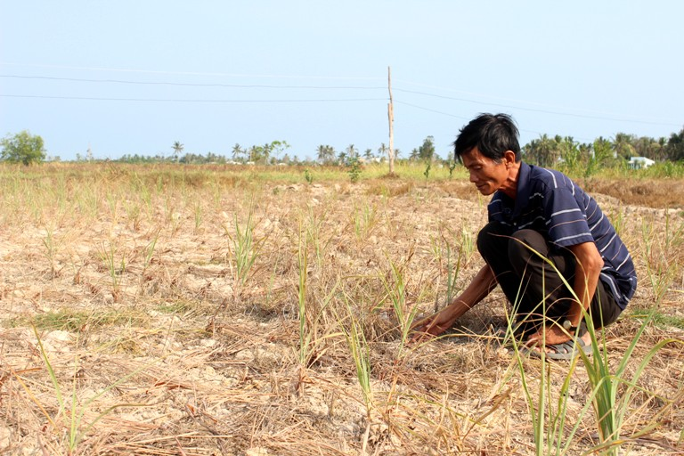 Numerous events to be held during APEC week on food security