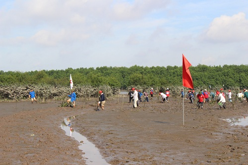 Japanese volunteers plant mangroves in Quang Ninh province
