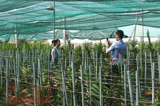 Ho Chi Minh city earns over VND13.8 trillion from agricultural production