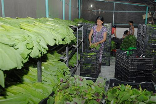 Ho Chi Minh city gives preferential loans to over 1.3 million poor families