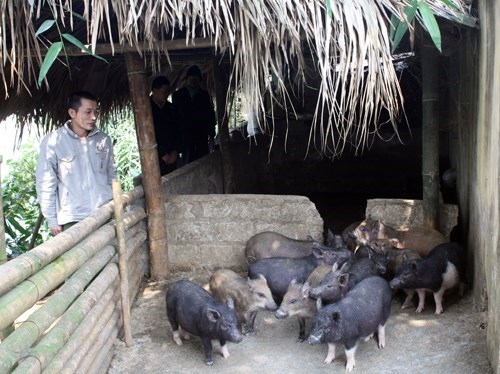 Over 124,000 Soc Trang households escape poverty