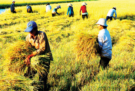Vietnamese rice industry should focus on quality: Experts
