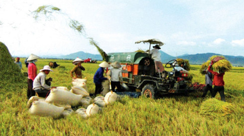 Agricultural growth still facing underlying risks