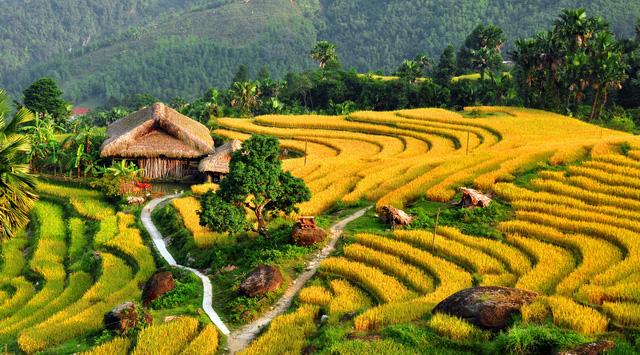 Vietnam's terraced fields on list of unbelievable landscapes