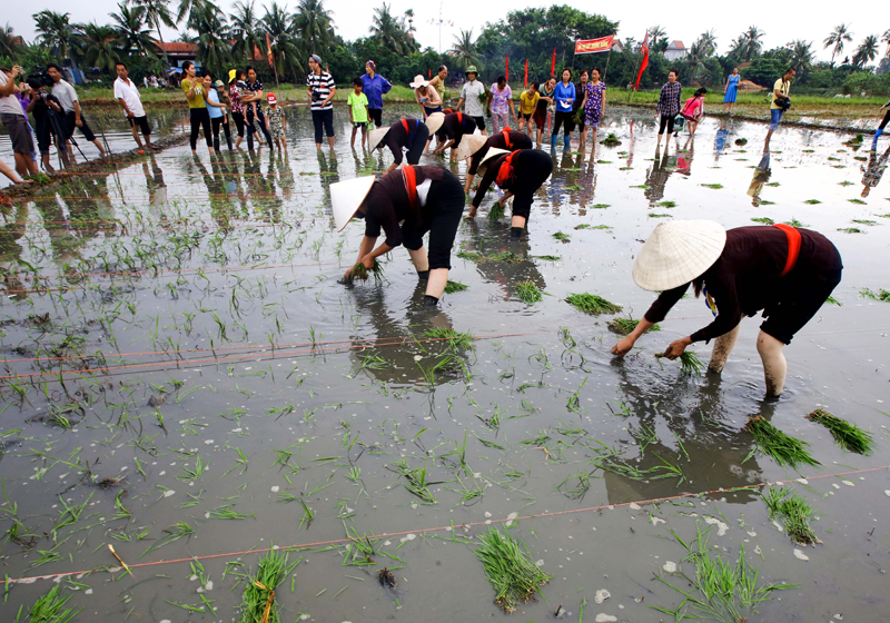 """Going to the field"" festival in Quang Ninh province"