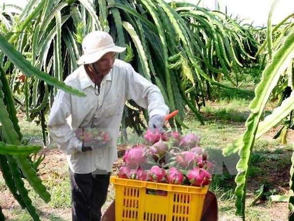 Fruit, veggie exports set record of US3.45 billion
