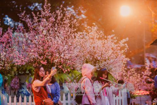 Japanese cherry festival to take place in Hanoi in March