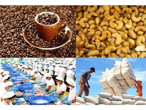 EVFTA a double edged sword of challenges and benefits for agriculture sector