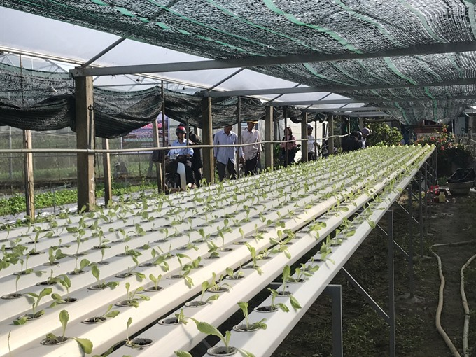 An IT expert promotes 'smartphone farming'