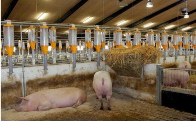 Vietnam looks to develop fertilizer production from livestock waste