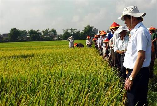 Binh Dinh province gives rice seedling support to ethnic minorities