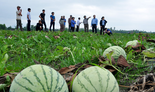 Connecting markets for watermelon consumption