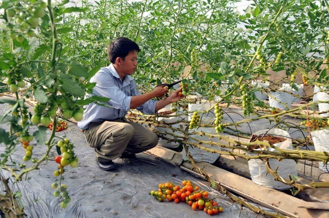 Quang Tri draws investment in hi-tech agriculture