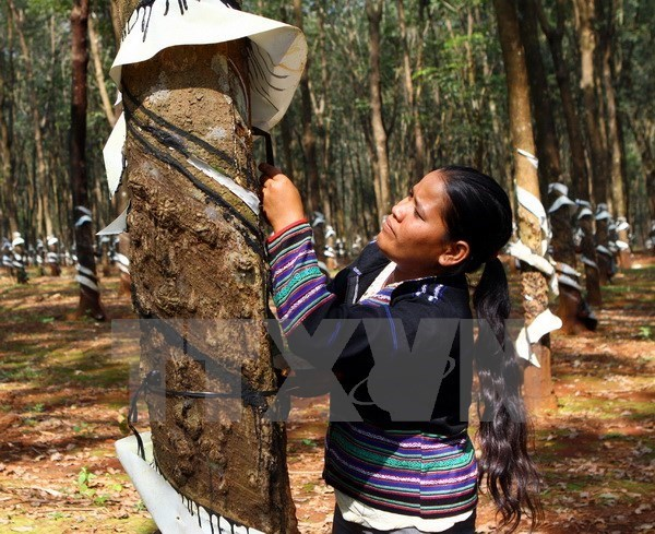 Rubber businesses need sustainable development strategies