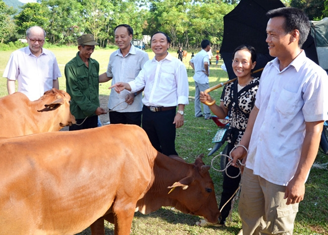 Cows presented to poor families in Tuyen Quang province