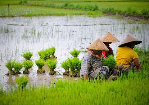 Vietnam and seven ASEAN countries among world's outperforming emerging economies