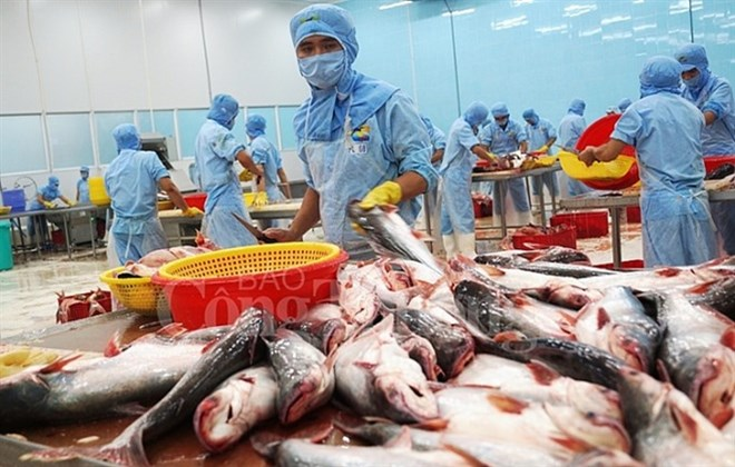 Tra fish exports to exceed USD2 billion