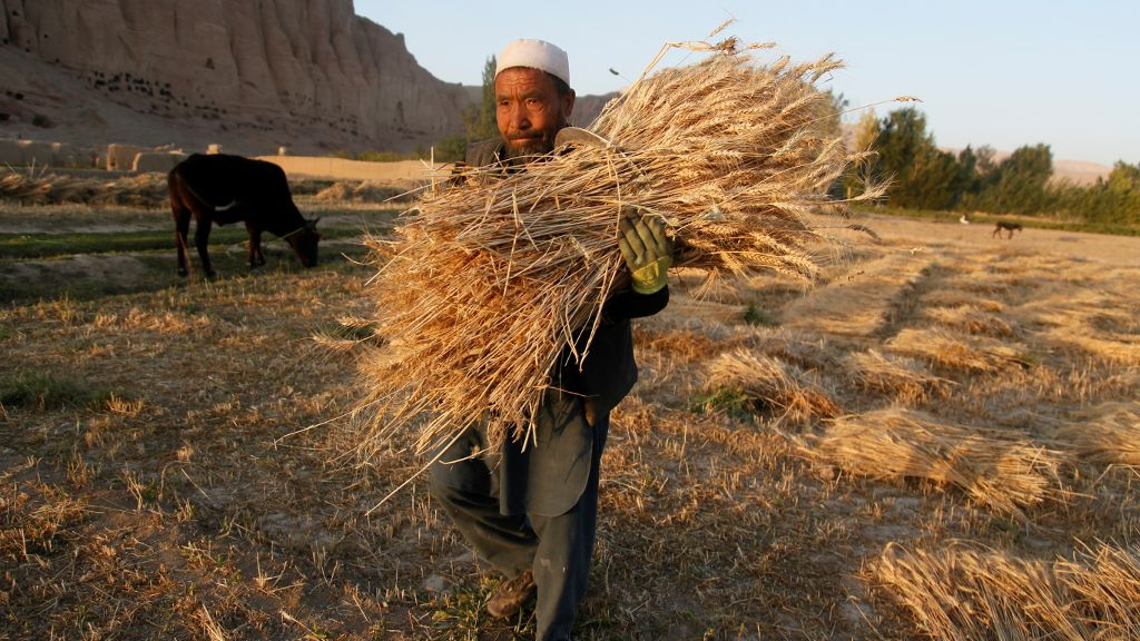 Afghanistan develops horticulture value chains