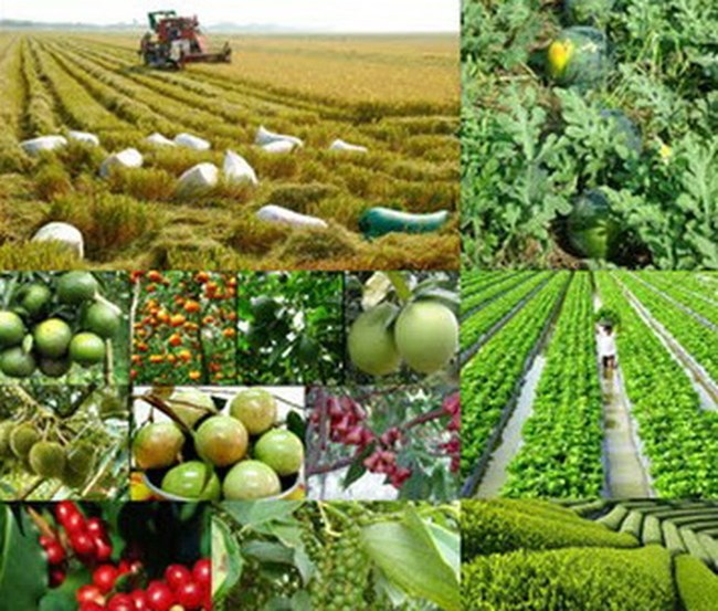 Cultivation targets USD21 billion in export revenue
