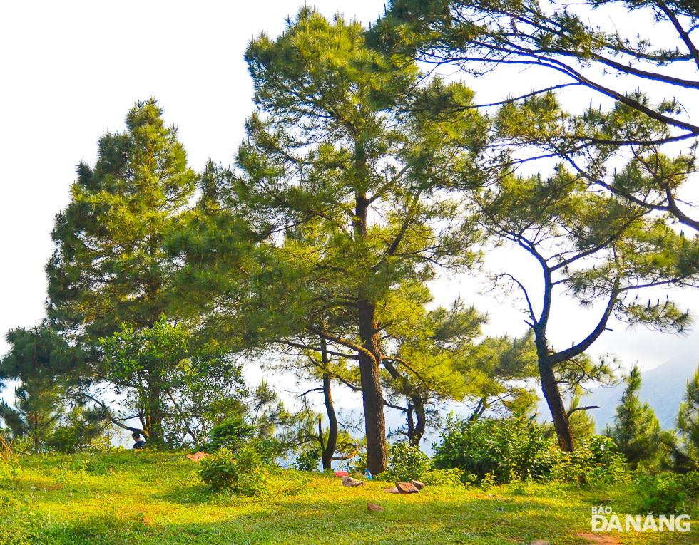 Pine hills on Hai Van Peak