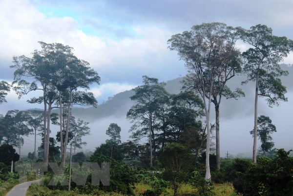 Efforts made to conserve biodiversity at Phuoc Binh National Park