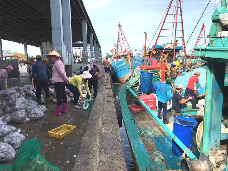 Southern province's largest fishing port operates efficiently