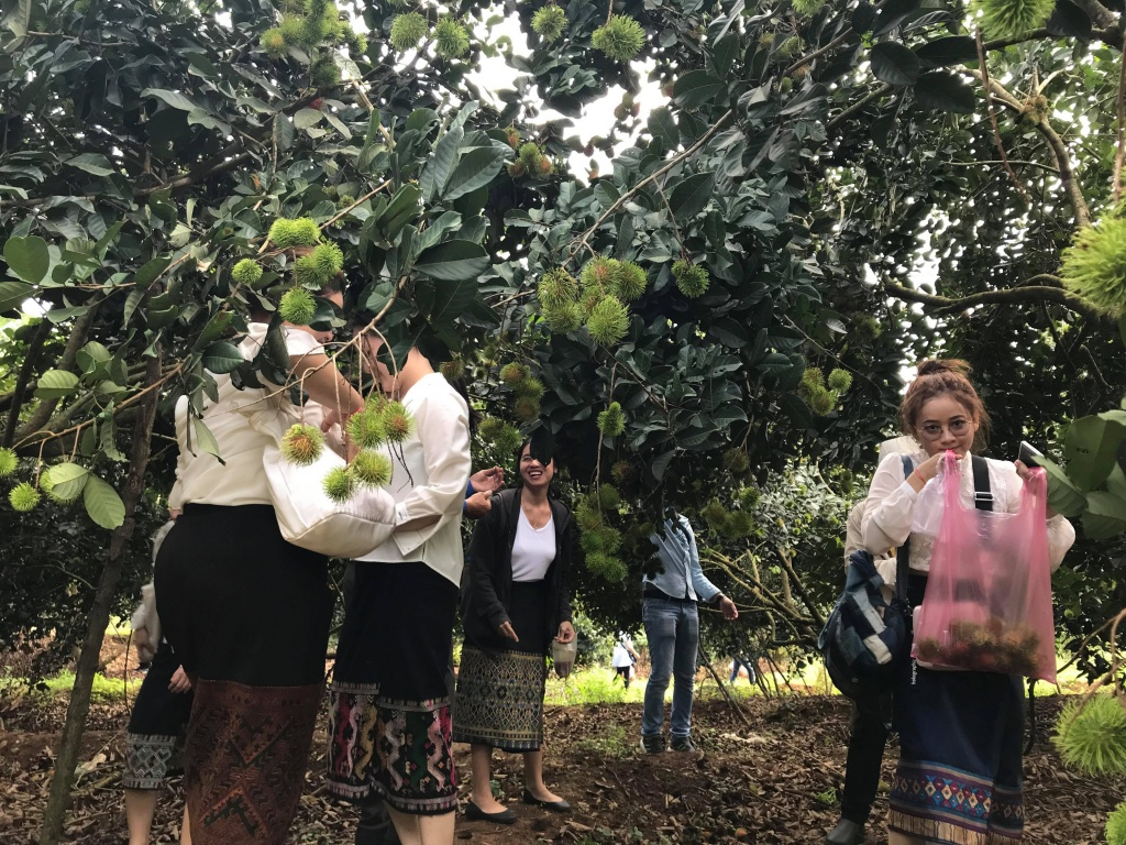 Lao and Cambodian students experience Vietnamese southern gardens