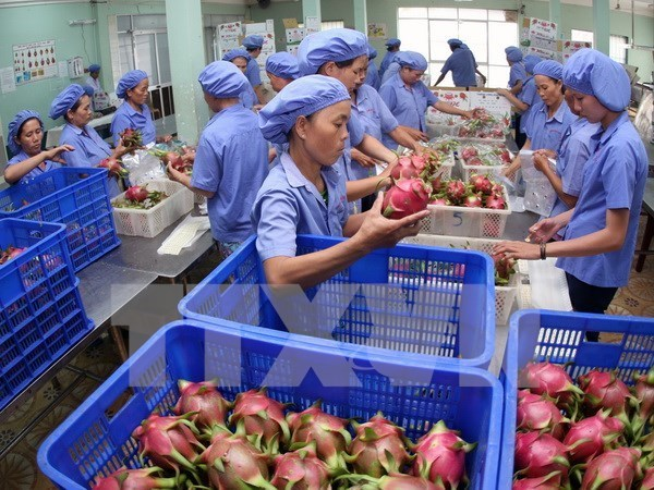 Fruit, vegetable exports top USD1.6 billion