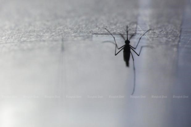 Thailand moves to control mosquito-borne Chikungunya disease