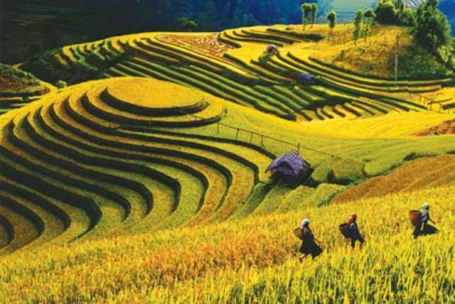 Mu Cang Chai terraced fields proposed as special national beautiful landscape