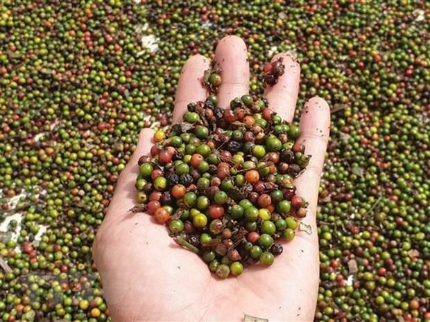 EVFTA opens door wide for Vietnam's agricultural produces: experts