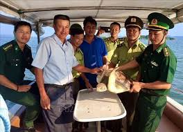 Green sea turtle released