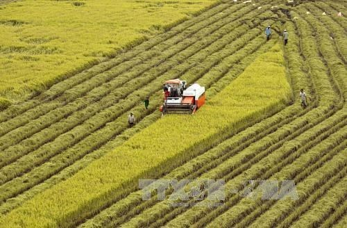 Agricultural sector gains trade surplus of 8.8 bln USD in 11 months