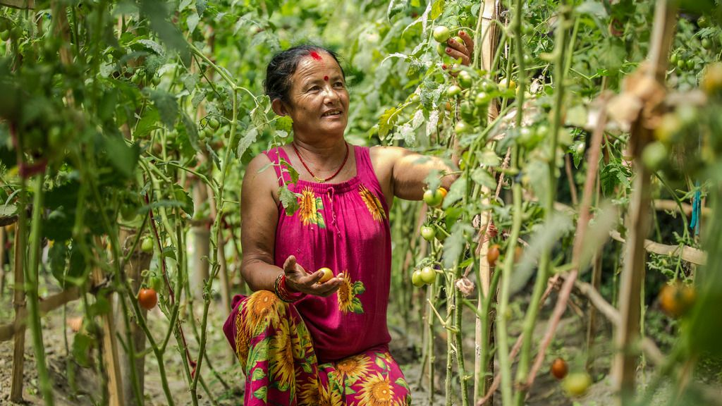 ADB helps Nepal to develop agriculture and improve food safety