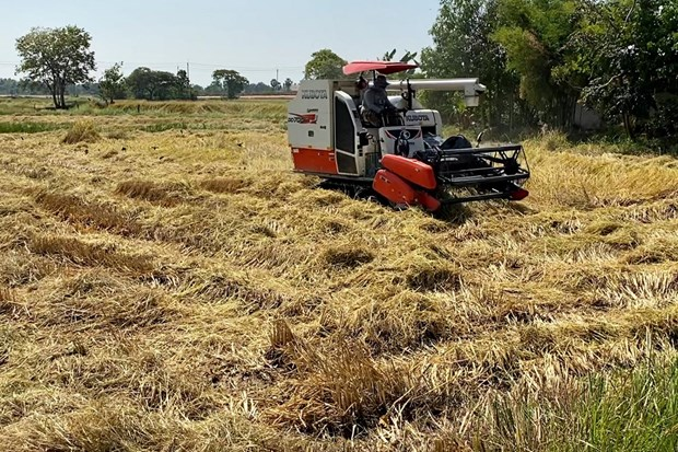 Thailand's paddy output to decline in 2019-2020 season