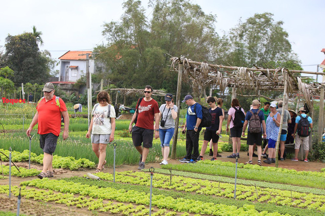 Hoi An to welcome first international tourists of 2020 at Tra Que vegetable village