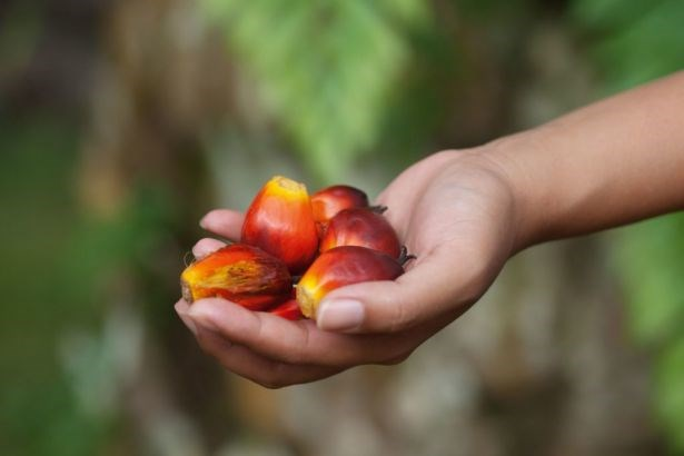 Indonesia exports over 36 million tonnes of palm oil in 2019