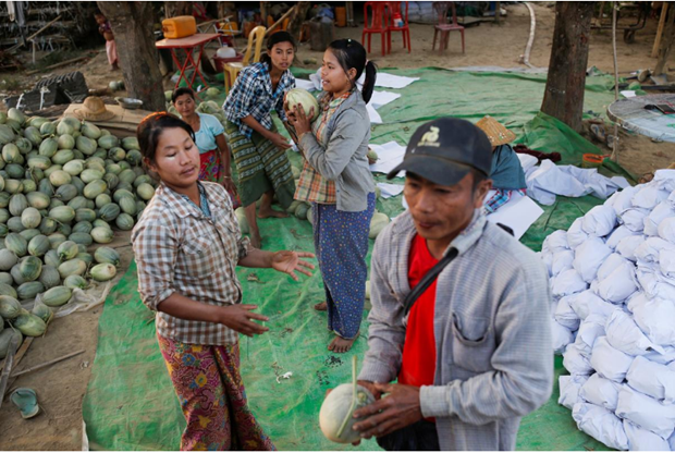 Myanmar's agricultural exports to China affected by nCoV outbreak