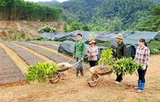 4,500 trees planted at Xuan Lien Nature Reserve
