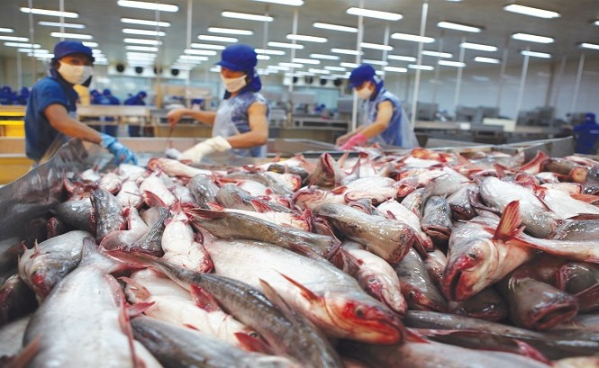 Tra fish export to US and China shows signs of recovery