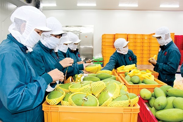 Agricultural, forestry and fisheries exports see surplus of USD2.8 billion