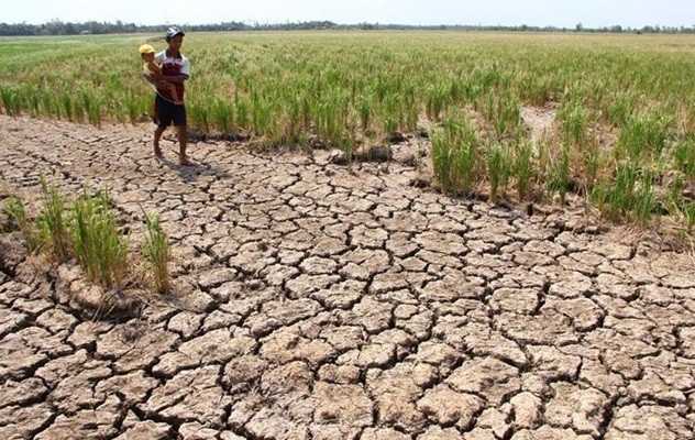 Eight Mekong Delta provinces supported 530 billion VND to prevent drought and salinization