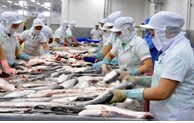 Trade promotion helps boost pangasius consumption