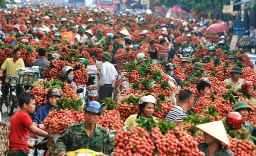 Online trading floor boosts post COVID-19 lychee consumption