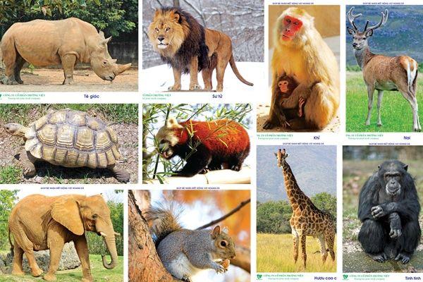 Australia applauds Vietnam's ban of wildlife imports and markets