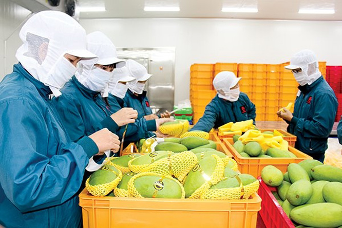 Exports of fruits and vegetables recover