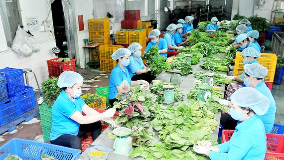 Ho Chi Minh city: Cooperative economy expected to contribute 0.6% to GDP