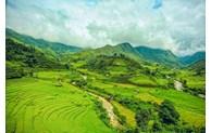 Charming Sa Pa in colour changing rice season
